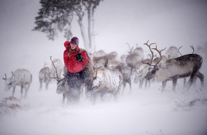 Aviemore, Scotland: Eve Grayson, a Reindeer herder of the Cairngorm Reindee